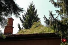 Biljke-krov