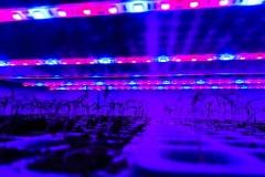 LED-osvetljenje-2