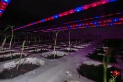 LED-osvetljenje-31
