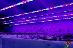 LED-osvetljenje