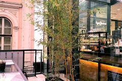 Žardinjere sa bambuseom