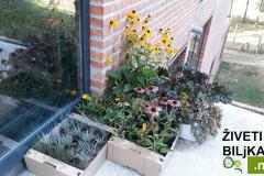 biljke za sadnju