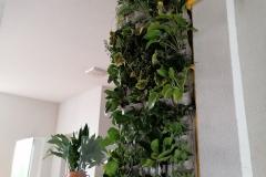 biljke-na-zidu