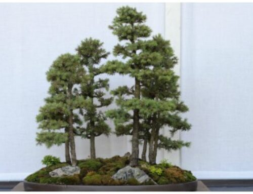 Istorija bonsaija