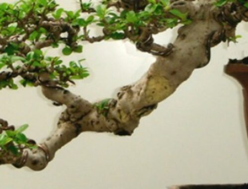 Šta je bonsai