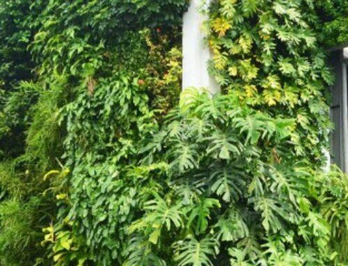 Vertikalno zelenilo