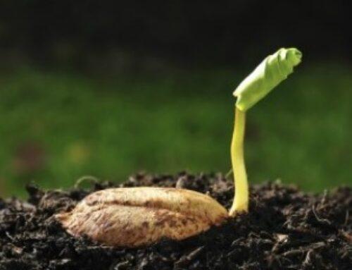 Uticaj kalifornijskih glista na kvalitet zemljišta