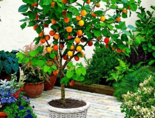 Voće kao deo vrta