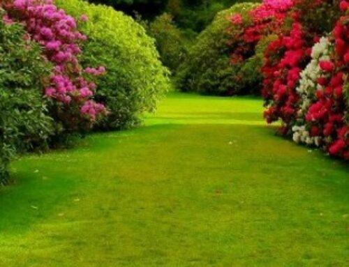 Preuređenje ili zasnivanje novog travnjaka?