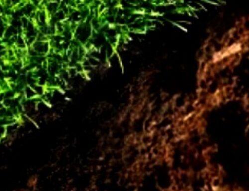 Đubrenje travnjaka pred zasnivanje