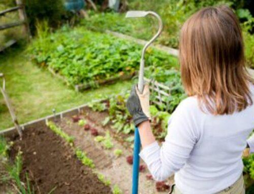 Dezinfekcija zemljišta, semena i reznica
