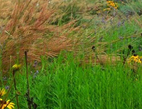 Grupe baštenskog cveća