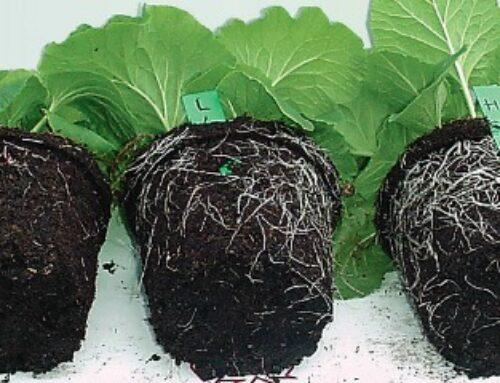 Spororazlažuće đubrivo – hrana koja je biljkama uvek dostupna