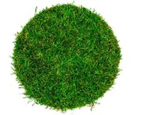 Zašto je važan travnjak?