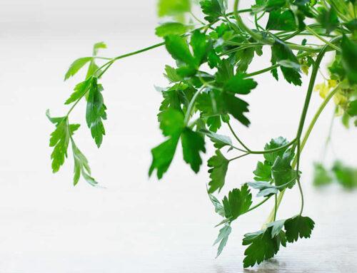 Sobne biljke i temperatura njihovog prezimljavanja