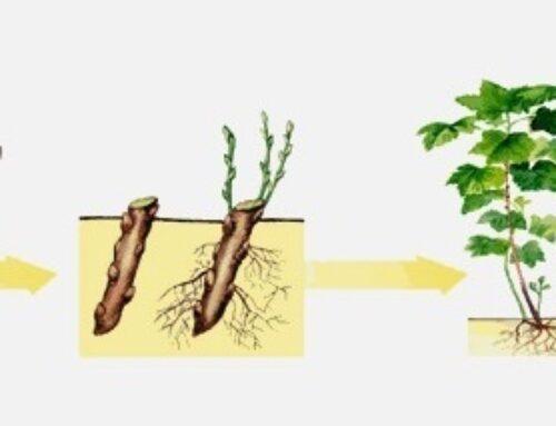 Rastvor i gel za ožiljavanje