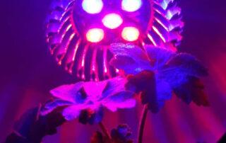 Kada biljka nema dovoljno svetla