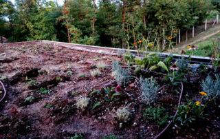 Zbog čega su važni zeleni krovovi