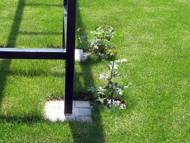 Projektovanje tepih rolo travnjaka