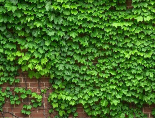 Zeleni zidovi vertikalne bašte