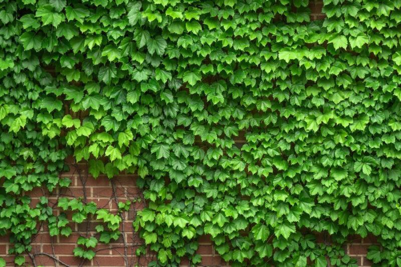 Zeleni zidovi i vertikalne bašte
