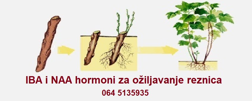 Hormoni za ožiljavanje