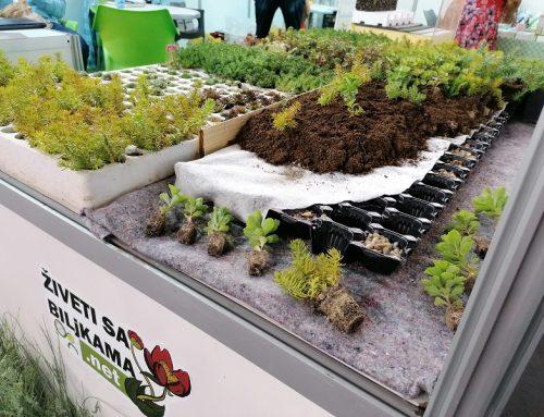 Biljke za zelene krovove